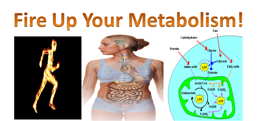 Your Metabolism