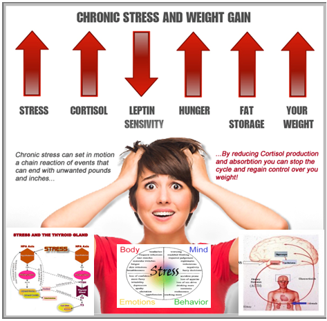 Stress and Fat Loss