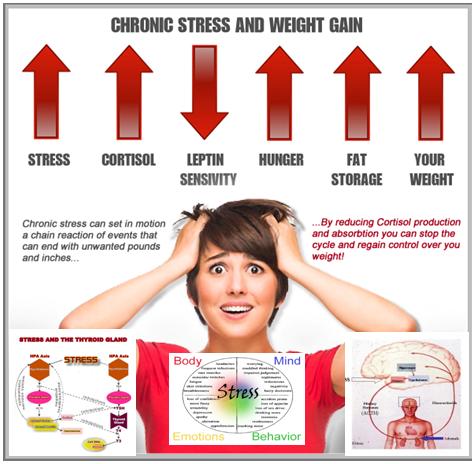 Stress and Fat Loss